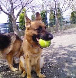 テニスボール2.jpg