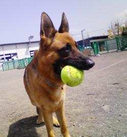 テニスボール3.jpg