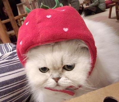 猫カフェ4.jpg