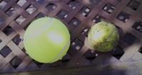 テニスボール1.jpg